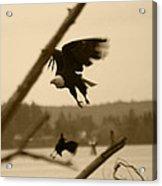 The Eagle Flies With The Crow Acrylic Print