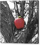 The Early Worm Gets The Apple Acrylic Print