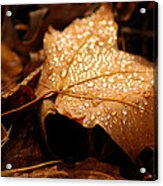 The Enlightened Maple Leaf Acrylic Print by LeeAnn McLaneGoetz McLaneGoetzStudioLLCcom