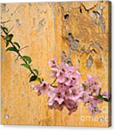 The Escaping Bougainvillea Acrylic Print