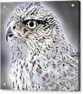 The Eye Of An Eagle  Acrylic Print by Yvonne Scott