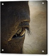 The Eyes Are The Window To The Soul Acrylic Print