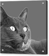 The Eyes Have It Acrylic Print