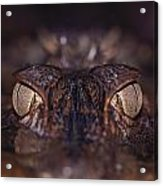 The Eyes Of A Crocodilian Acrylic Print