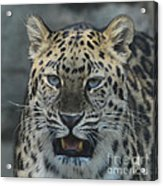 The Eyes Of A Jaguar Acrylic Print