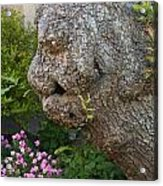 The Face In The Tree Acrylic Print