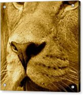 The Face Of God In Sepia Tones Acrylic Print