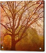 The Fairy Tree Acrylic Print