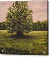 The Fairy Tree Acrylic Print