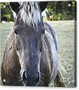 The Farmers Horse Acrylic Print