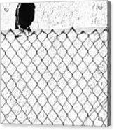 The Fence That Follows Acrylic Print
