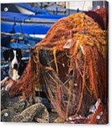 The Fisherman's Dog II Acrylic Print