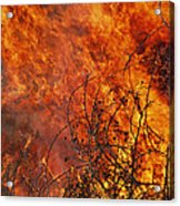 The Flames Of A Controlled Fire Acrylic Print