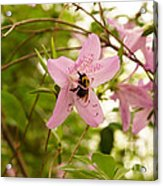 The Flower And The Bumble Bee Acrylic Print