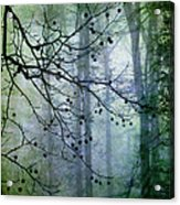 The Forest Cathedral Acrylic Print