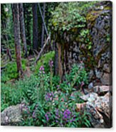 The Forest Trail Acrylic Print