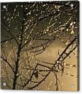 The Frozen Branches Of A Small Birch Acrylic Print