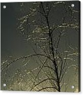 The Frozen Branches Of A Small Tree Acrylic Print