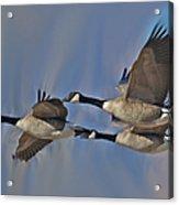 The Geese Acrylic Print