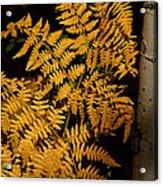 The Golden Fern Acrylic Print