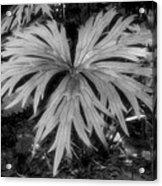 The Great Leaf Acrylic Print