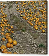 The Great Pumpkin Patch Trail Acrylic Print