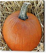 The Great Pumpkin Acrylic Print