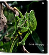 The Green Dude Acrylic Print
