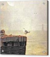 The Gull On The Groyne Acrylic Print