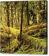 The Hall Of Mosses Acrylic Print