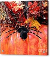The Harvest Spider Acrylic Print