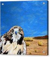 The Hawk Acrylic Print