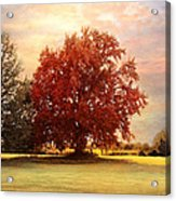 The Healing Tree  Acrylic Print by Jai Johnson