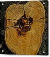 The Heart Of A Tree Acrylic Print