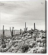 The High Desert  Acrylic Print