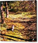 The Hiker Acrylic Print