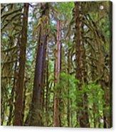 The Hoh Rain Forest Acrylic Print