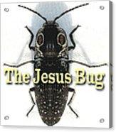 The Jesus Bug Acrylic Print