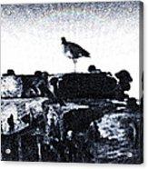 The Jetty Bird Acrylic Print