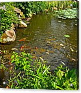 The Koi Are Feeding Acrylic Print