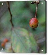 The Last Berry Acrylic Print by Beverly Hammond