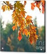 The Last Bit Of Fall Acrylic Print
