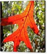 The Last Leaf Acrylic Print