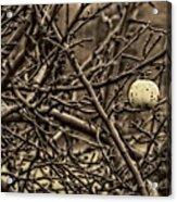 The Last Little Apple On The Tree Acrylic Print