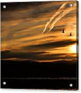 The Last Sunset Acrylic Print