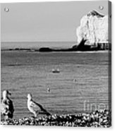 The Lazy Albatrosses Acrylic Print