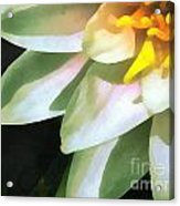 The Lily Flower Acrylic Print
