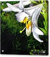 The Lily Acrylic Print
