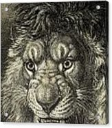 The Lion, King Of Beasts.  From El Acrylic Print