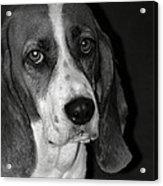 The Little Dog Acrylic Print